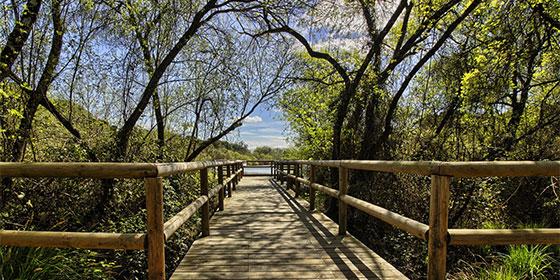 Vacaciones verano: Parque Doñana