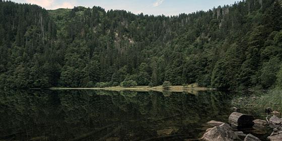 Vacaciones verano: Selva Negra, Alemania